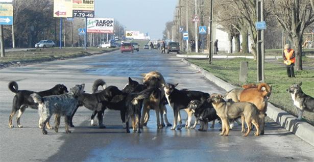 За две недели в Бердянске отловили 68 собак