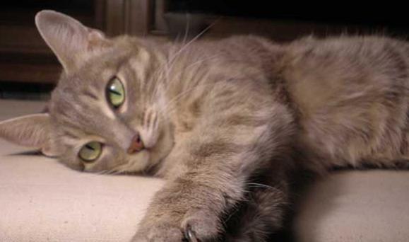 Кошка-долгожительница по-запорожски