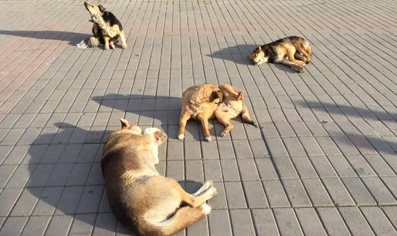 На моего сына напали бездомные псы. Он чудом остался жив: В сеть попало видео скандальной передачи о Бердянске