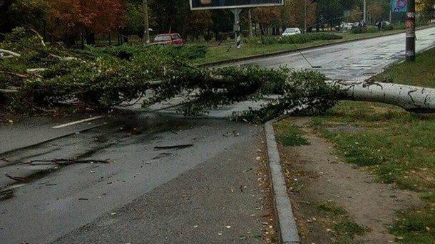 Ураганный ветер в Запорожье свалил огромный тополь на Набережной