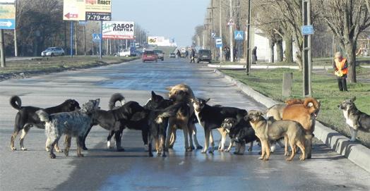 Власти Бердянска анонсировали масштабный отлов собак