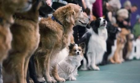 Запорожцев приглашают на выставку собак